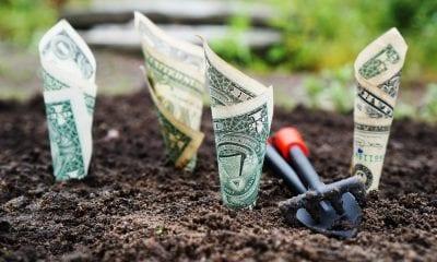 dinheiro dólar