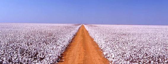 Agro: a Indústria-Riqueza do Brasil; Conheça a ação que recomendamos no setor
